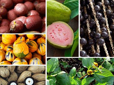 Amazon Plant Oils